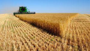 Сбор-пшеницы