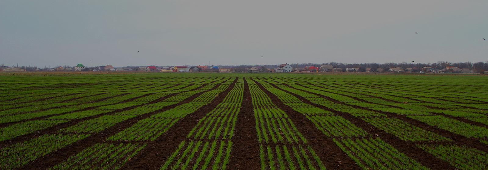 Получайте стабильно высокие урожаи, заказывая посевмат напрямую от производителя и оригинатора